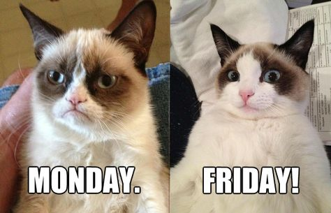 Happy Friday Everyone Tgif Grumpy Cat Awesome Sayings