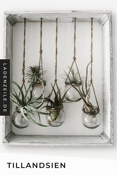Luftpflanzen machen deine Dekoration zum Blickfang. Auf LadenZeile findest du Tillandsien, die du im Behälter aus Glas oder Holz wunderbar einfach in Szene setzen kannst. #luftpflanzen #tillandsien #dekoration #deko #zimmerpflanzen #pflanzen