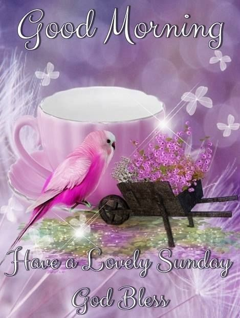 Lovely Morning Sunday Image sunday good morning sunday images sunday images for pinterest facebook su… | Sunday images, Good morning sunday images, Sunday greetings
