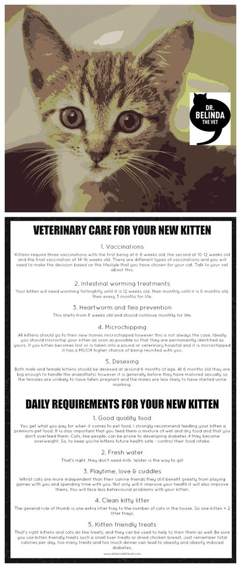 New Kitten What You Need To Know Dr Belinda The Vet Dog Cat Pictures Kitten Cat Spray