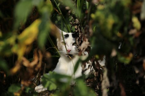 De buurpoes in de jungle van de Lekerwaard