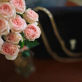 لرؤية التصميم على الخلفية يوجد في حساب Noory Vip 3 Noory Vip 3 Noory Vip 3 خامات خلفيات للتصميم مخطوطه مخطوطات للتصاميم Rose Flowers Plants