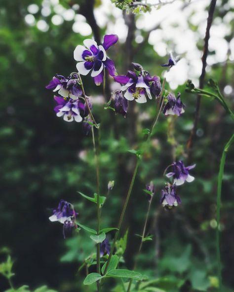 94 gilla-markeringar, 6 kommentarer - Marias kolonilott  🌱 allotment (@lottliv) på Instagram: Älskar!💚💚💚 . . . #odlingslott #kolonilott #trädgård #allotment #jardin #giardino #garden #tuin…