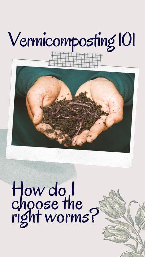 16 Soil Vermicomposting Ideas Vermicomposting Compost Soil