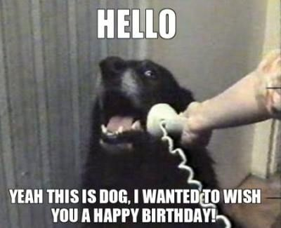 Funny Happy Birthday Quotes For Him Hilarious Doggies 32 Ideas Happy Birthday Dog Funny Happy Birthday Song Funny Happy Birthday Meme