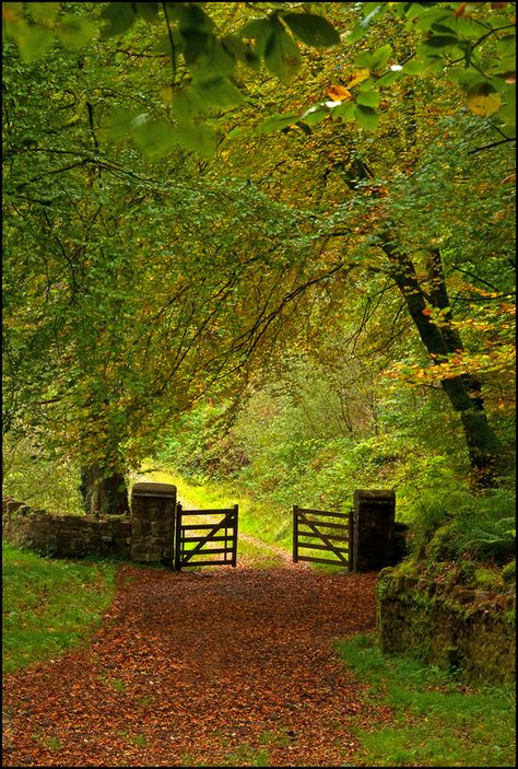 """""""The road less travelled"""" by Bill Power on - This road less travelled in the forest area of Ireland must be entered by way of the gate even on a beautiful autumn day like this one. Country Life, Country Roads, Country Living, Country Walk, Foto Nature, Beautiful Places, Beautiful Pictures, Pathways, Belle Photo"""