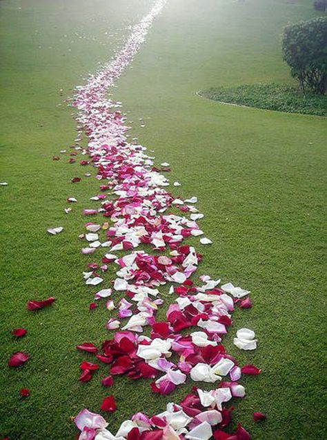 Petals for Every Occasion - www.flyboynaturals.com Children's Parties and Portraits | Flyboy Naturals Blog