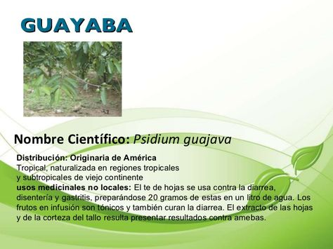 Plantas Medicinales Propiedades Y Usos Buscar Con Google