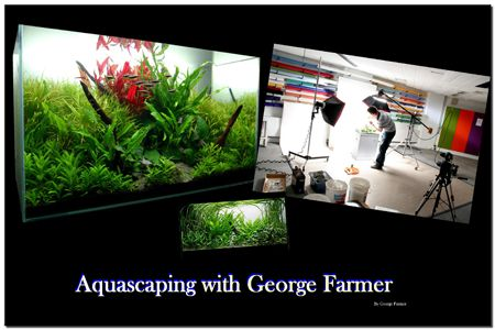 Aquascaping With George Farmer Aquascaping Pinterest - Beautiful photography reveals underwater complexity aquariums