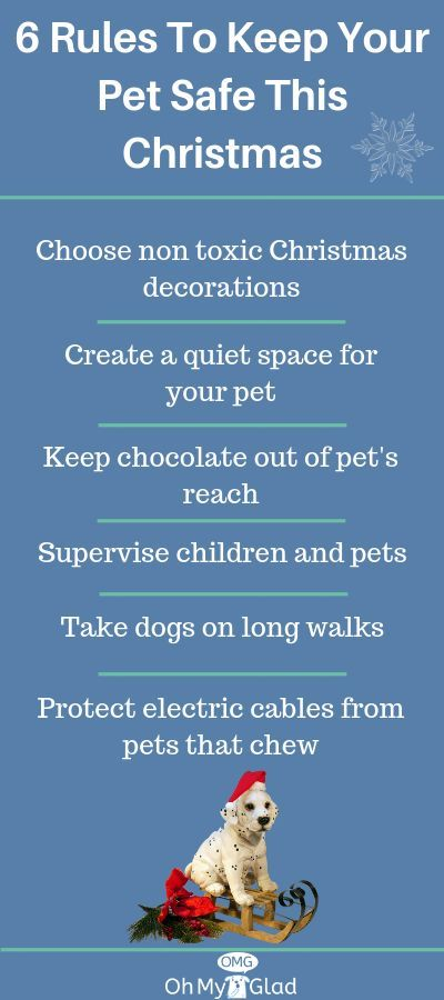 To Ensure Your Dog Remains Safe This Christmas We Have Put
