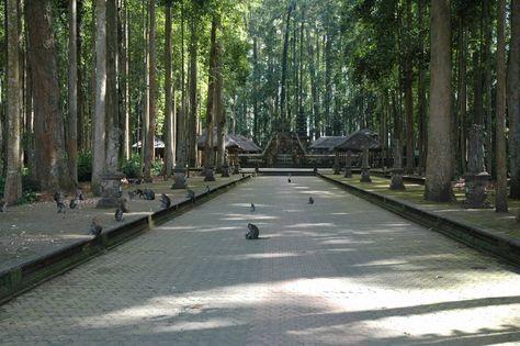 Tempat Wisata Sangeh Di Bali Adalah Tempat Wisata Hutan