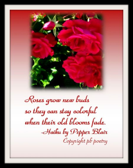 Wwwlove Quotes Impressive Rosebudsview More Of Pepper's Works Herehttpwww.lovepb