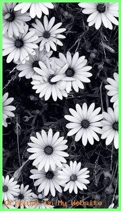 Wallpaper Backgrounds Vintage Wallpaper Tumblr Wallpaper Para Celular Wallpapertumblrae Nature Photography Tumblr Wallpaper Nature Photography Flowers