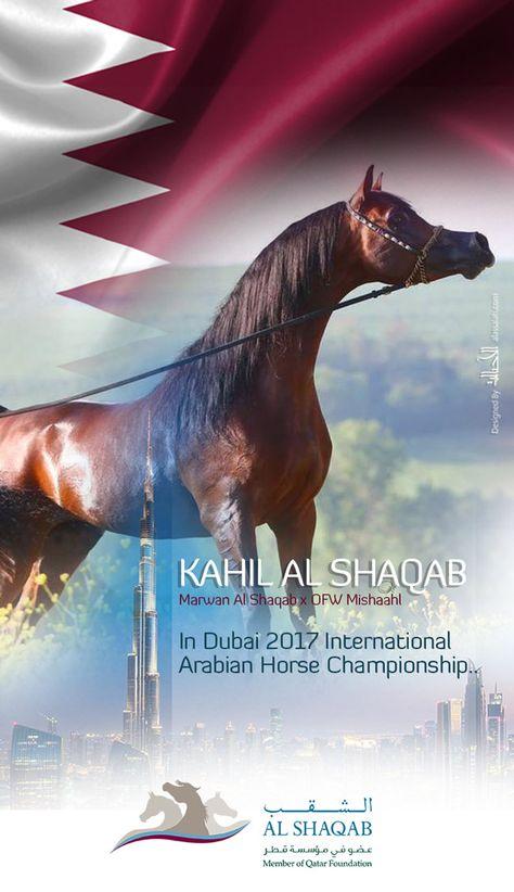 كحيل الشقب إلى دبي ٢٠١٧ Kahil Al Shaqab To Dubai 2017 Caballos Del Mundo Caballos Caballo Arabe