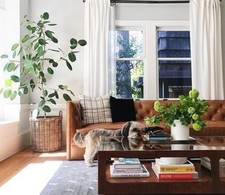 Room Board Macalester Leather Sofa Macalester Sofa With Novato Chair Living Room Modern Living Room Furniture Leather Couches Living Room Brown Leather Couch Living Room Modern Furniture Living Room