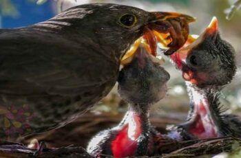 تفسير رؤية الدود في المنام 8 In 2020 Animals Looking For Love Bird