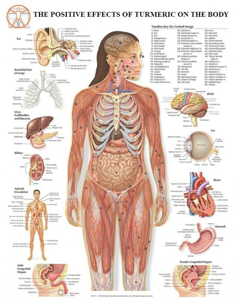 Female Human Body Diagram Of Organs See More About Female Human