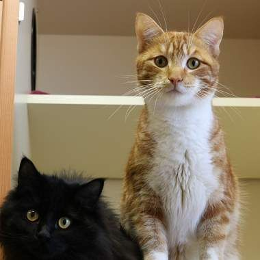 Autumn Sky Nightshoot Are An Adorable Bonded Pair Cat Adoption Cat Rescue Dog Cat
