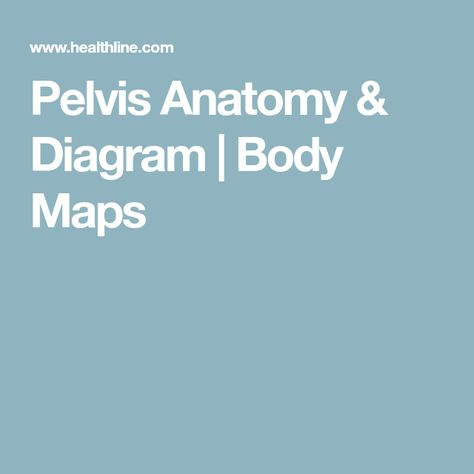 Female Pelvis Diagram Anatomy Function Of Bones Muscles