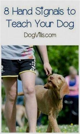 Dog Training Fort Worth Dog Training 16 Weeks Dog Training 8