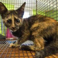 Pet Card Cat Adoption Siberian Cats For Sale Cute Cats