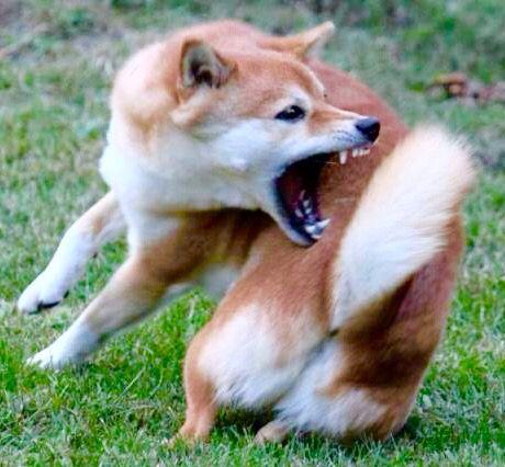 ผลการค้นหารูปภาพสำหรับ dog bite the tail