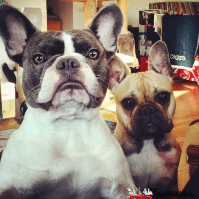 Carsten Und Seine Freundin Emma Http Bit Ly 2t4ui56 Your Frenchie On Our Side Http Bit Ly 1kiuo0l Tiere Hund Franzosische Bulldogge Hunde