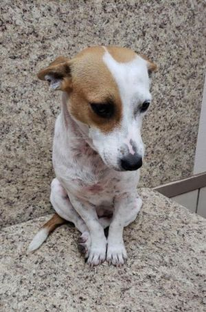 Adopt Ruby On Adopt Don T Shop Rescue Dogs Dogs Australian