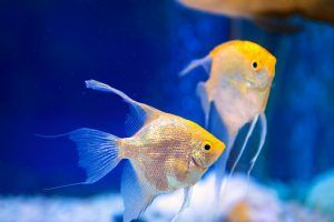 Searching For A Fish Store Near Me Looking For A Fish Store Near San Francisco At Caesar S Tropical Fish We Have A Variety Of Tr Tropical Fish Fish Fish Pet