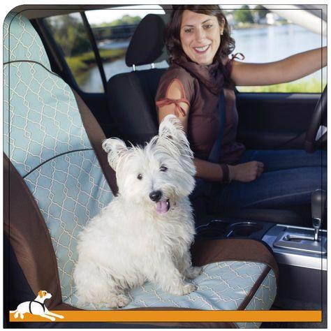 Wheaten Terrier In Car Seat