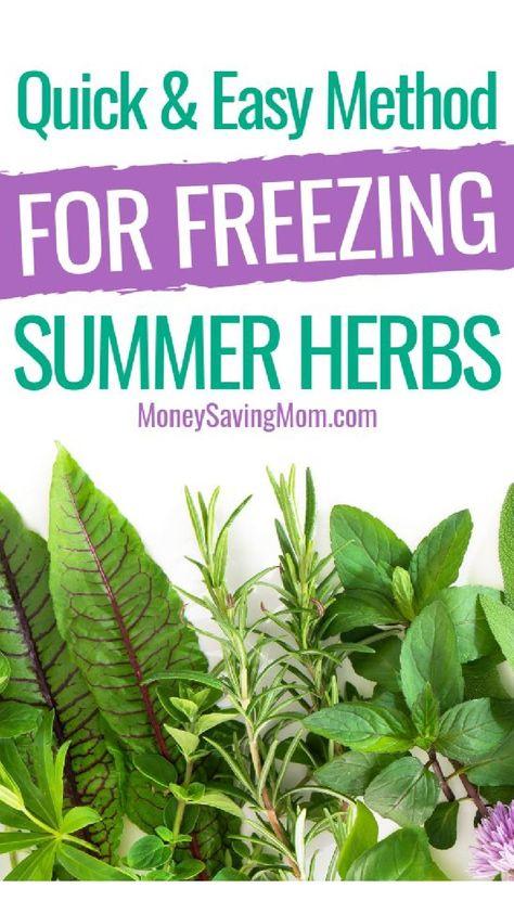 Quick & Easy Method For Freezing Summer Herbs