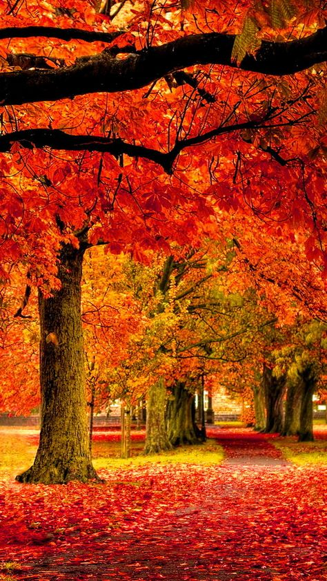 autumn park 640 x 1136 Wallpapers disponible para su descarga gratuita.