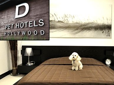 D Pet Hotels Hollywood