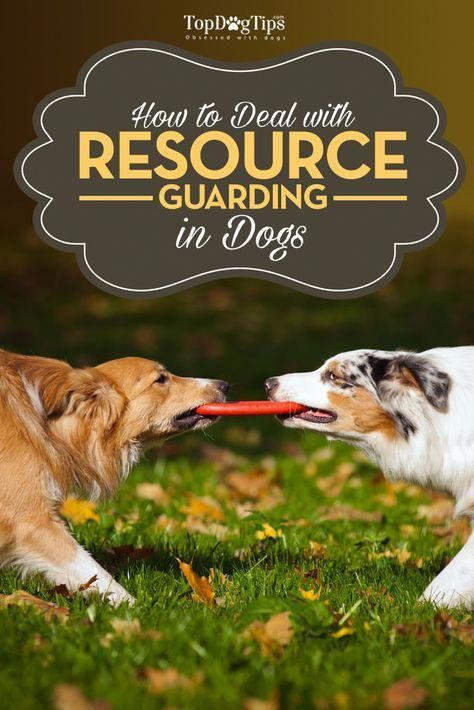 Check The Webpage For More Information About Dog Training Tips