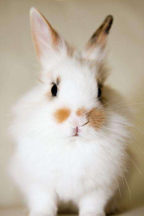 bunnie love <3