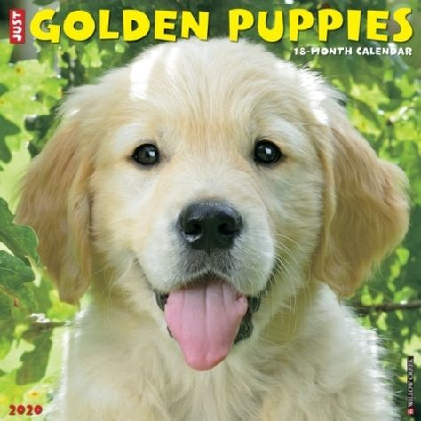 Golden Puppies 2020 Calendar Whoever Said You Can T Buy