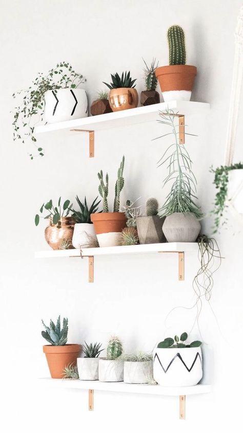 Plant Shelf Decor Ideas