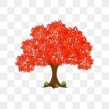 Red Maple Tree Maple Big Tree Maple Leaf Png And Vector With Transparent Background For Free Download Red Maple Tree Maple Leaf Tree Tree Art