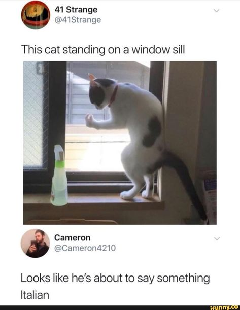 Picture memes 5 comments — iFunny This cat standing on a window sill Looks like he's about to say something Italian – popular memes on the site Really Funny Memes, Stupid Funny Memes, Funny Relatable Memes, Haha Funny, Funny Cute, Funny Texts, Funny Stuff, Funny Fails, Hilarious Sayings