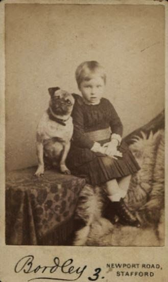 Three Vintage Pug Photographs Pugs Cute Pugs Pug Pictures
