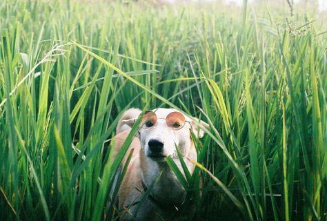 Best Gluta Dog Images On Pinterest Happy Dogs Dog - Meet gluta the smiling dog that beat cancer