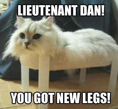 The Best Cat Meme Of The Decade 50 11 Funny Cat Memes Best Cat Memes Cute Kitten Meme