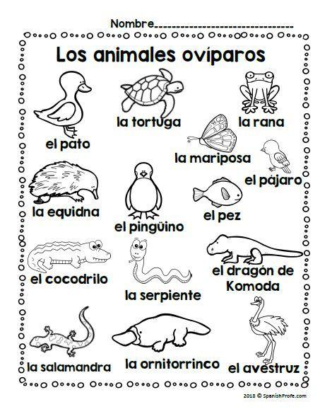 Los Animales Oviparos Oviparous Animals In Spanish Animales Oviparos Animales Viviparos Animales Oviparos Y Viviparos