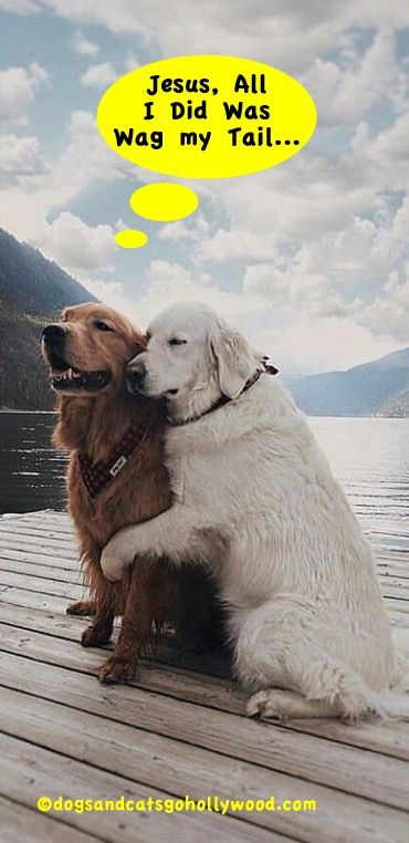 Funniest Dog Videos And Pictures Battle Of The Websites Cute