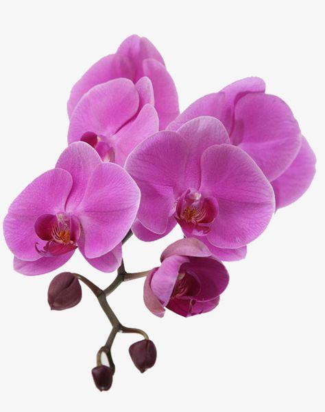Orquideas Roxas Purple Orchids Orchids Flowers