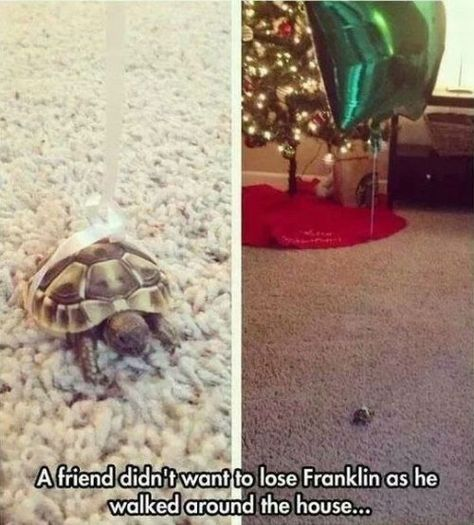 A friend didn't want to lose Franklin the turtle as he walked around the house..
