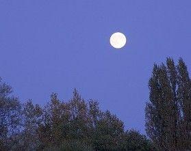 Www Rustica Fr Video Quand La Lune Nous Interdit De Jardiner