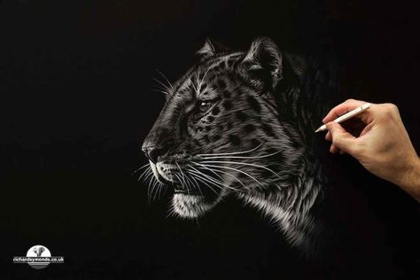 Top Ideas About Drawing On Pinterest Posts Miniature And Ink - Stunning drawings of endangered wild animals by richard symonds