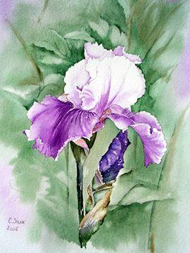 Kti Crea Art Floral Aquarelle Fleurs Et Aquarelle