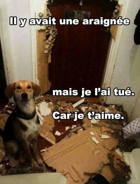Le meilleur ami de l'Homme http://www.15heures.com/photos/meilleur-ami-lhomme-3471.html #LOL